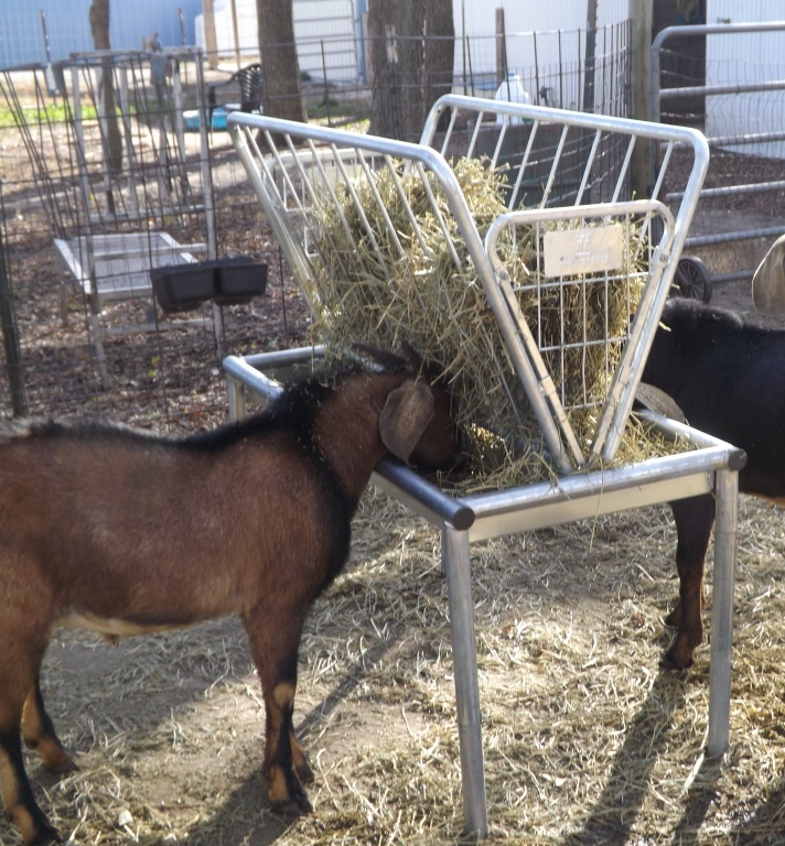free feeder goat or pin challenged plans to hay available at survival sheep download with rack pdf