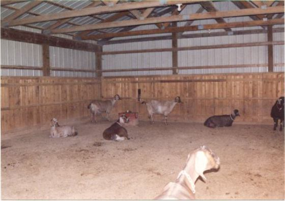 INSIDE DOE LOAFING BARN
