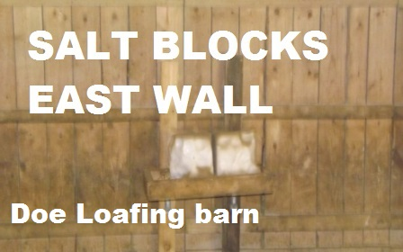Salt-BLOCKS-doe-loafing-barn-06-21-2014-018.jpg