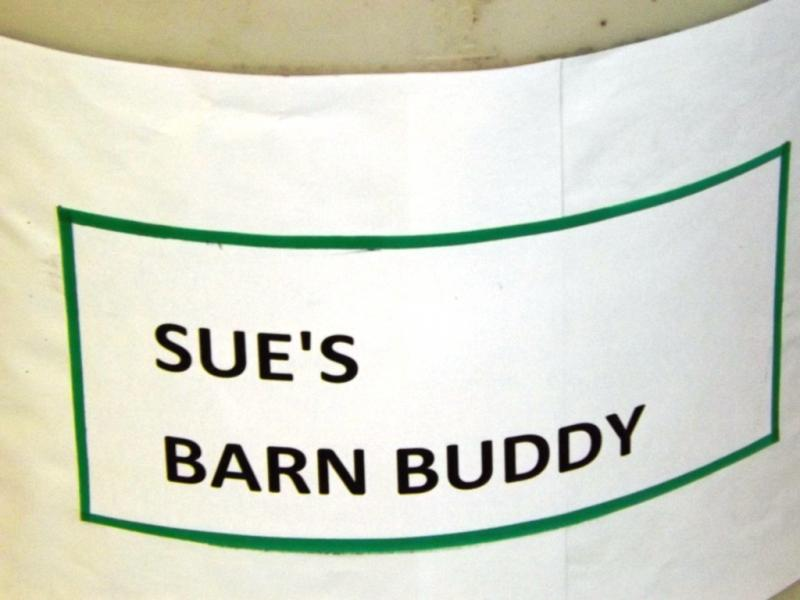 Sue's Barn Buddy-007.jpg
